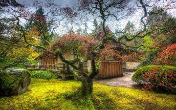дерево, сад, японка, hdr, деревь, портленд