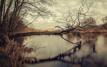 озеро, дерево, отражение, осень, воде