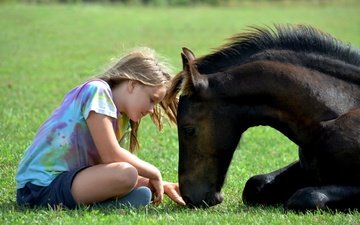 horse, grass, children, girl, animal, friends, foal