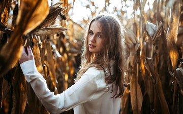 девушка, портрет, взгляд, волосы, кукуруза, лицо