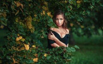 tree, leaves, girl, portrait, branch, look, autumn, model, black dress, photoshoot, linden, nick kolosov, dmitry butvilovsky