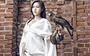girl, pose, look, bird, hair, asian, falcon