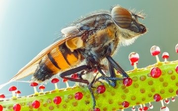 глаза, природа, макро, насекомое, фон, роса, капли, растение, муха