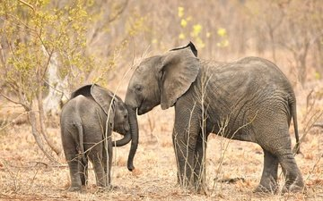 nature, africa, elephants, trunk