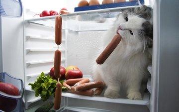 кот, мордочка, усы, кошка, взгляд, холодильник, сосиски