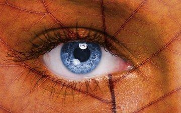 лист, прожилки, глаз, ресницы, бровь