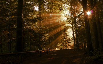 road, trees, nature, forest, rays, the sun's rays