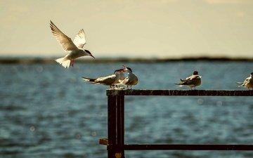 вода, море, лето, крылья, птицы, чайки