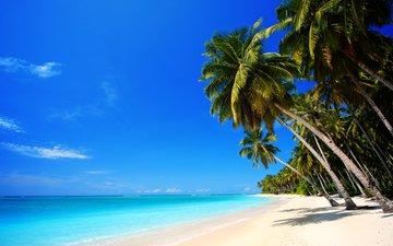 sea, sand, beach, palm trees, stay, tropics