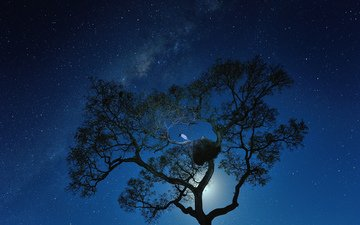 night, tree, stars, socket