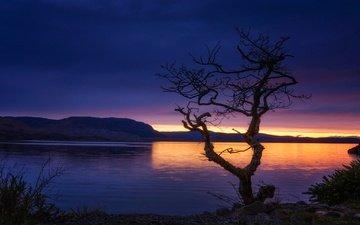 озеро, горы, дерево, шотландия