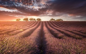 light, nature, field, lavender