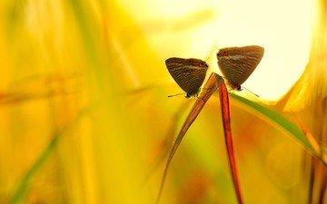 трава, макро, насекомые, бабочки