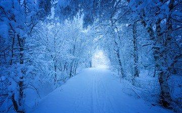 дорога, деревья, снег, лес, зима, пейзаж, следы, сугробы