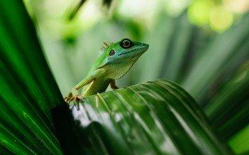 листья, ящерица, растение, геккон, пресмыкающееся