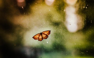insect, butterfly, wings, blur
