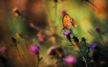 flowers, grass, plants, insect, background, butterfly, wings