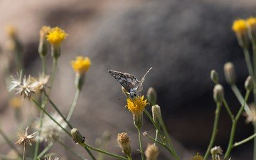 plants, insect, butterfly, wings, wildflowers, anne reeves