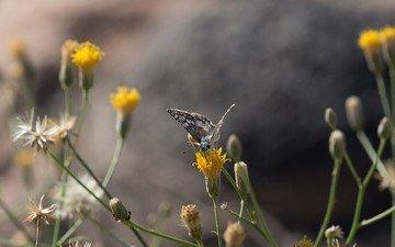 растения, насекомое, бабочка, крылья, полевые цветы, anne reeves