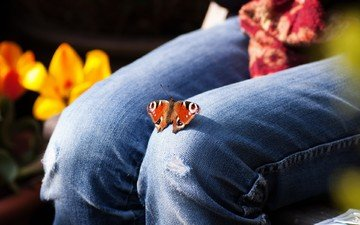 flowers, insect, butterfly, jeans, feet, tulips, knees