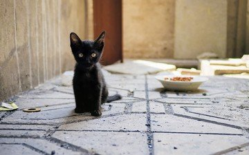 eyes, look, kitty, food, bowl, black cat