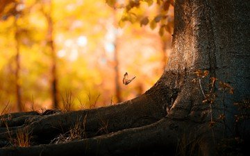tree, leaves, insect, autumn, butterfly, roots