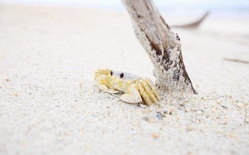 nature, tree, shore, sand, beach, crab