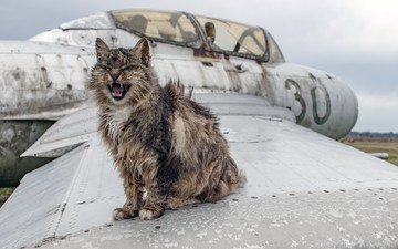 the plane, animals, cat, muzzle, teeth, language, wing