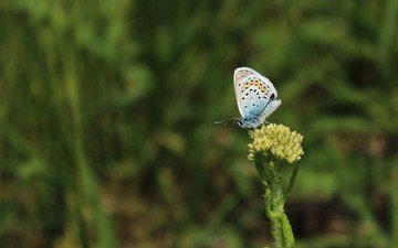 grass, insect, butterfly, wings, plant