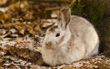 природа, кролик, животное, заяц