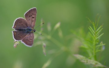 nature, plants, insect, background, butterfly, wings