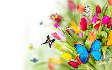 цветы, крылья, насекомые, тюльпаны, бабочки