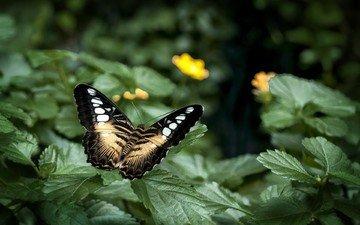цветы, листья, насекомое, бабочка, крылья