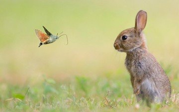 grass, nature, insect, animals, meadow, rabbit, hare, moth