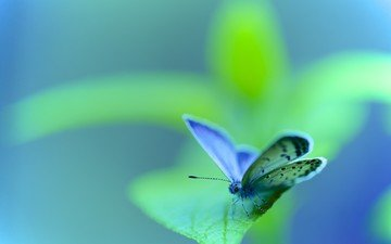 насекомое, бабочка, крылья, зеленый лист, мотылек, боке