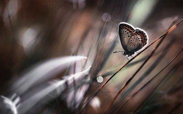 трава, насекомое, фон, бабочка, крылья
