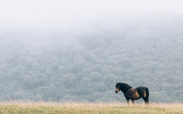 horse, nature, fog, field, mane
