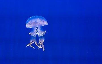 вода, море, медуза, подводный мир