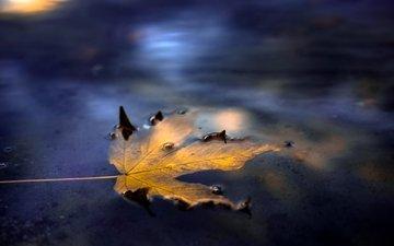 вода, осень, лист, улица, кленовый лист