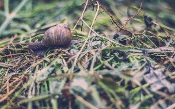 трава, панцирь, усики, улитка, боке