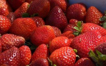клубника, ягоды, спелые, сладкие