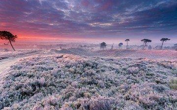 the sky, grass, sunset, landscape, field, frost