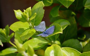 nature, leaves, wings, insects, butterfly, plant