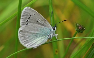 grass, macro, butterfly, wings, insects, blue
