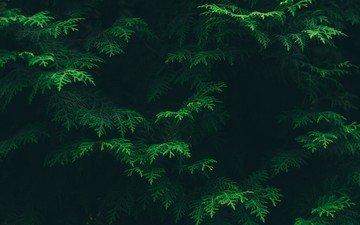 деревья, зелень, листья, ветки, листва