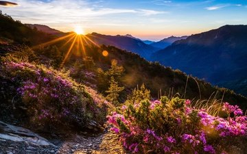 the sky, flowers, clouds, mountains, the sun, hills, nature, forest, sunset, rays, landscape, fog, rhododendrons