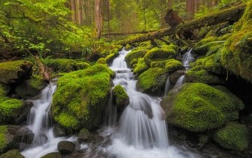 stones, forest, stream, waterfall, washington, moss, river, cascade, olympic national park