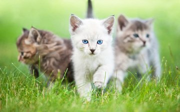 eyes, grass, look, cats, kittens, rita kochmarjova