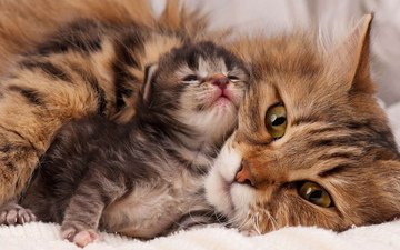 muzzle, mustache, cat, look, kitty, cats, masik