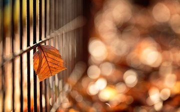макро, осень, забор, лист, боке, mirai.takahashi